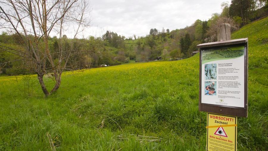 Naturschutzgebiet Trichter/Ehehalde im Weggental, Rottenburg am Neckar. Foto: Gerhard Groebe